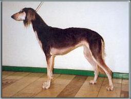 bariqa